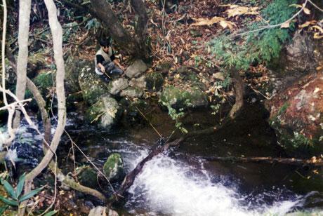 松沢川での渓流釣り