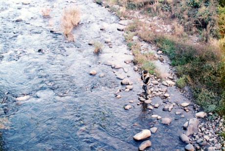 依田川での渓流釣り